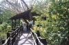 12-3-shimba-hills-lodge-tree-top-walkway
