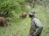 125herdsman-with-rhino