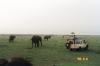 19-elephants-in-maasai-mara